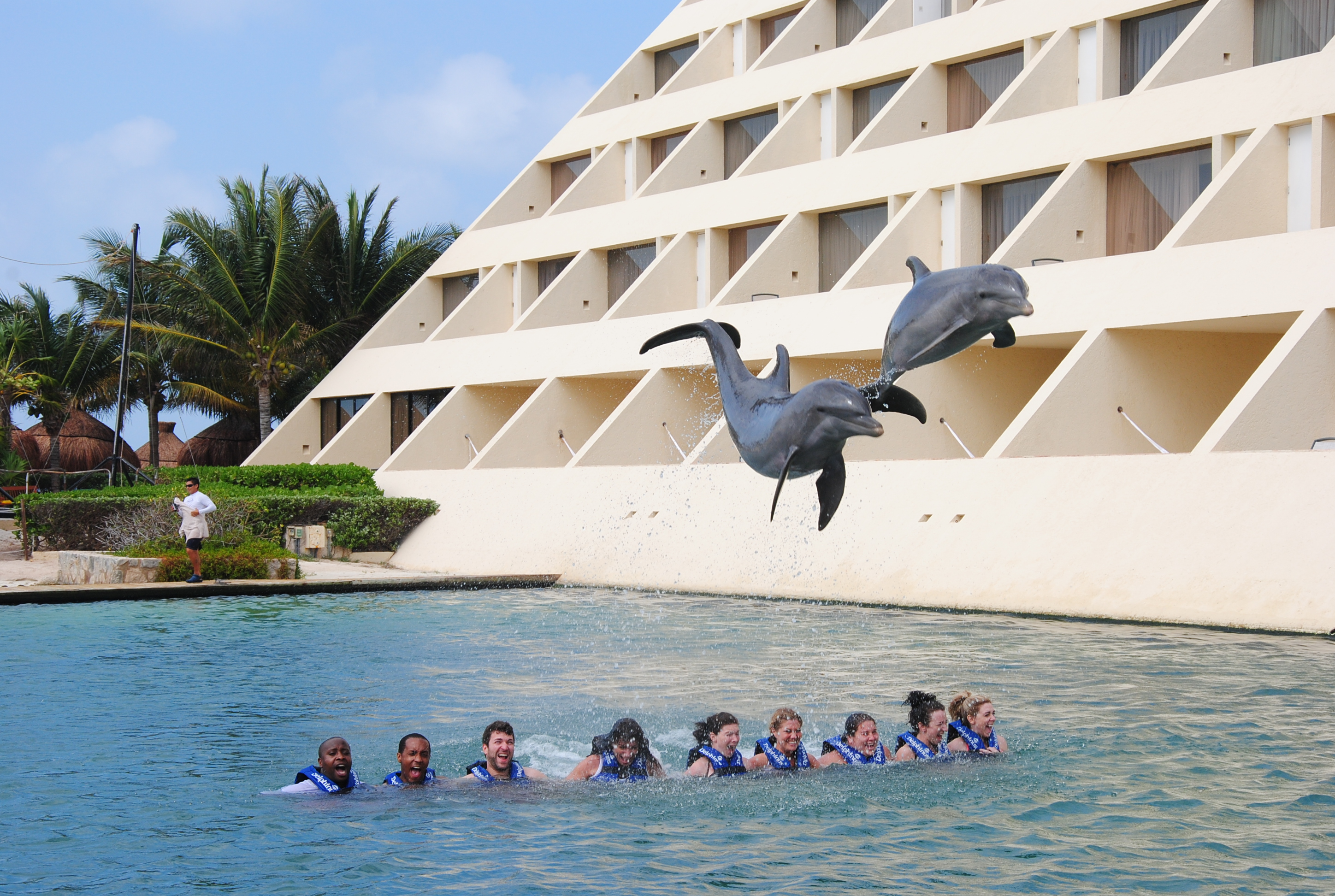 Delphinus Dreams Cancun Day Dreams The Official Blog