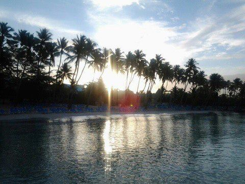 The setting sun shines through a grove of palm trees at Dreams La Romana Resort & Spa.