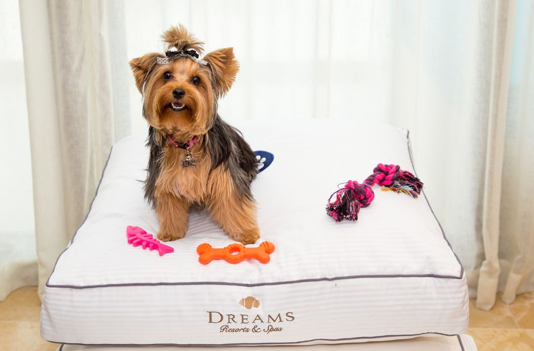 Dreams_PetFriendly